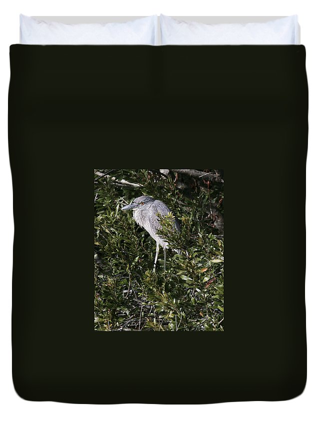 Bird Duvet Cover featuring the photograph Hiding by Phill Doherty