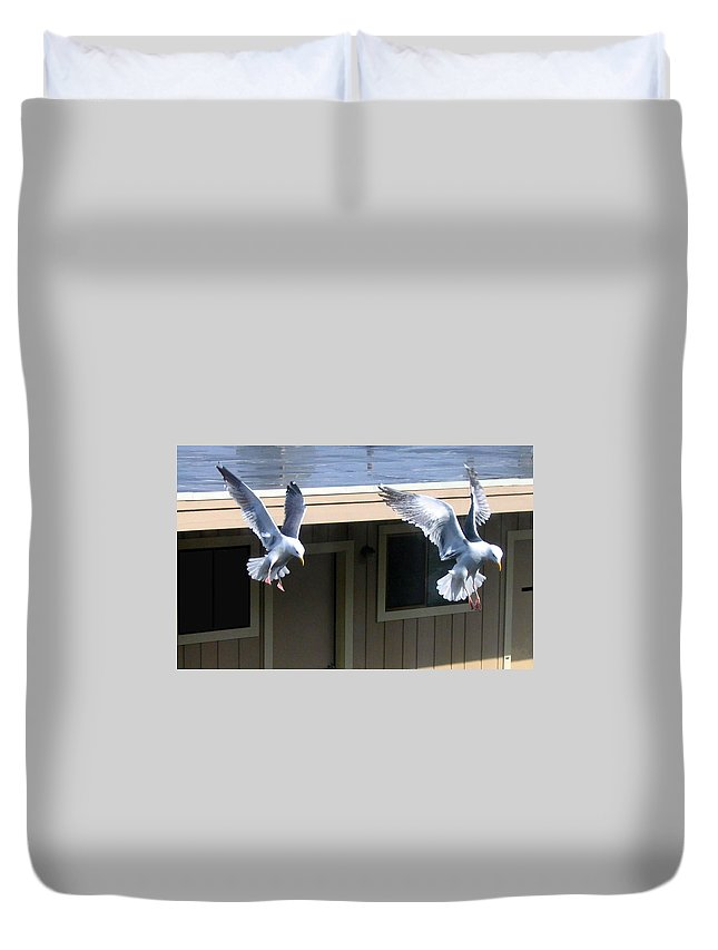 Seagulls Duvet Cover featuring the photograph High Spirits by Will Borden