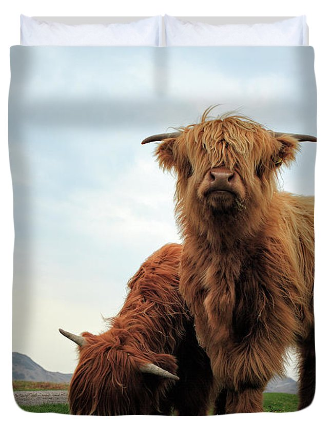 Highland Cows Duvet Cover featuring the photograph Highland Cow Calves by Grant Glendinning