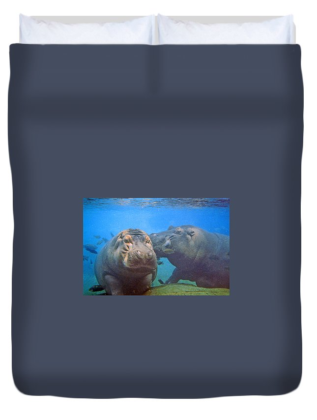 Animals Duvet Cover featuring the photograph Hippos In Love by Steve Karol