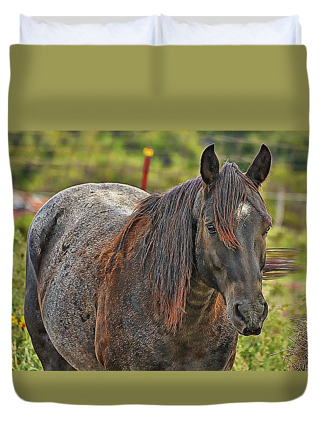 Horse Duvet Cover featuring the photograph His Name Is Seven by Diana Cannon