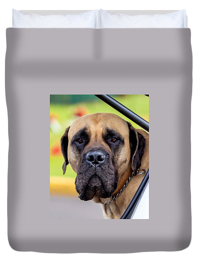 Mastiff Duvet Cover featuring the photograph His Name Is Tiny by Craig Watanabe