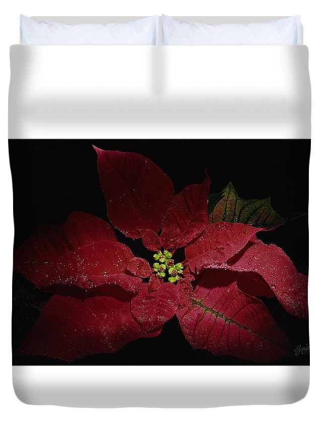 Flower For Holiday Is A Poinsettia Real Red Color Duvet Cover featuring the photograph Holiday Poinsettia by Georgia Brauer