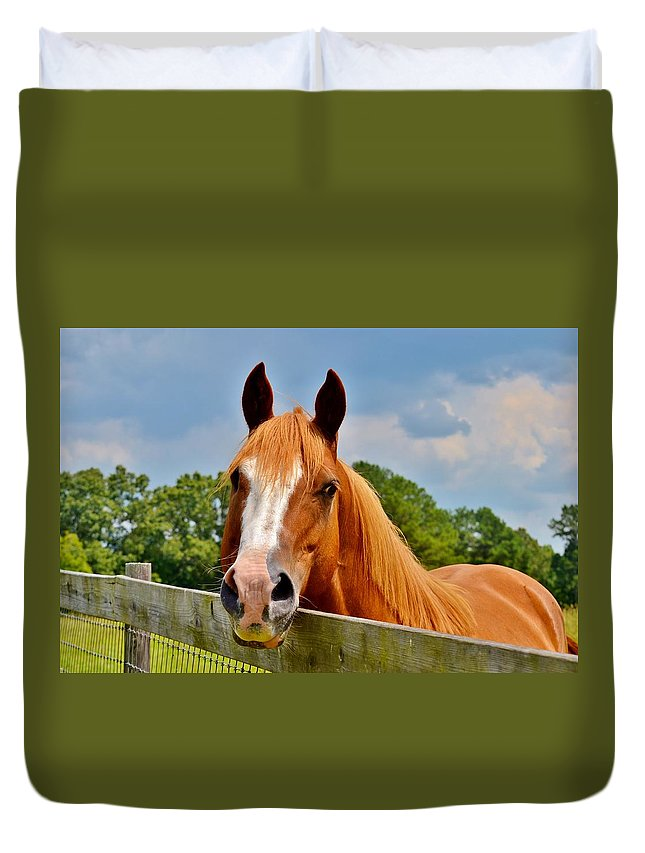 Horse Duvet Cover featuring the photograph Holly Springs by Eileen Brymer