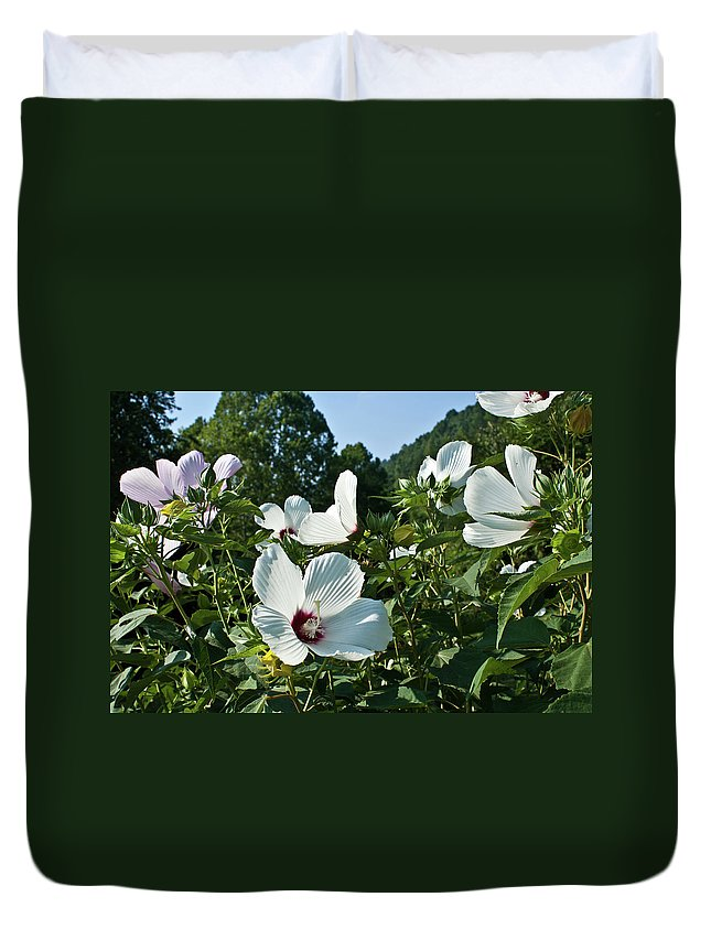 Hollyhock Duvet Cover featuring the photograph Hollyhock At Sunrise by Douglas Barnett