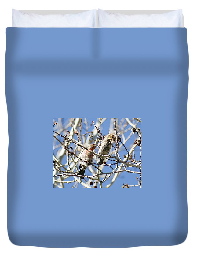 Home Duvet Cover featuring the photograph Home Hunters by Marilyn Hunt