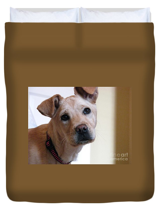Dog Duvet Cover featuring the photograph Honey by Amanda Barcon