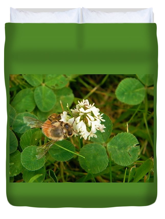 Honey Bee Duvet Cover featuring the photograph Honeybee On Clover Looking At Camera by Rory Cubel