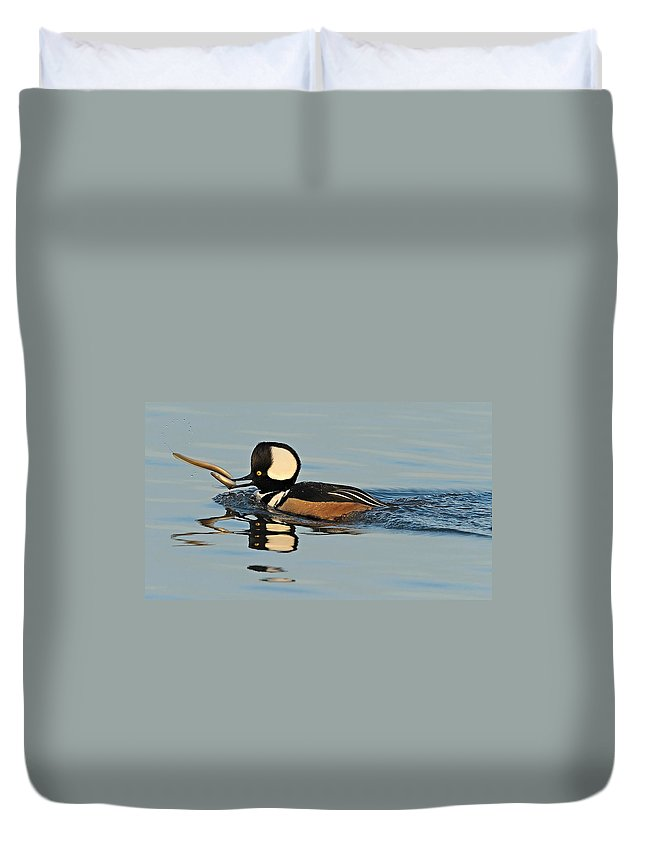 Merganser Duvet Cover featuring the photograph Hooded Merganser And Eel by William Jobes