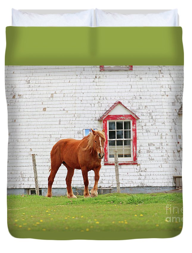 Prince Edward Island Duvet Cover featuring the photograph Horse At Panmure Island Lighthouse 5756 by Jack Schultz