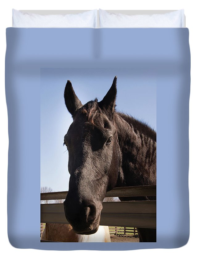 Horse Duvet Cover featuring the photograph Horse By A Fence. by Diane Schuler