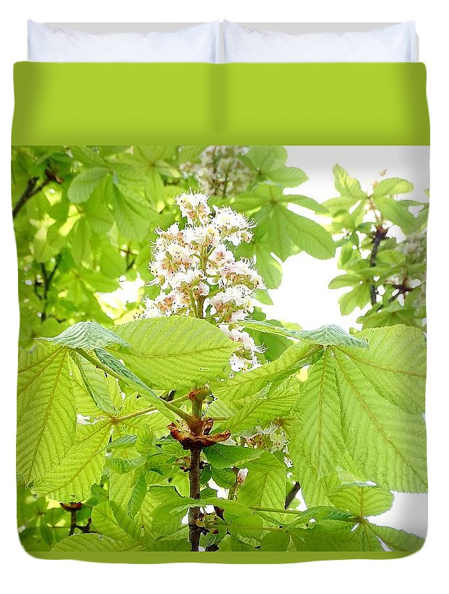 Horse Chestnuts Duvet Cover featuring the photograph Horse Chestnuts by Mhiss Little