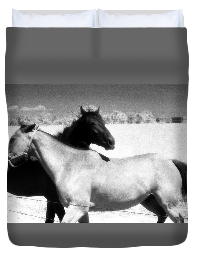 Horses Duvet Cover featuring the photograph Horse Friends Two by Lyle Crump