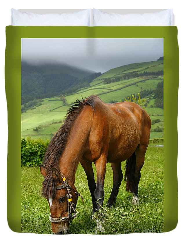 Animals Duvet Cover featuring the photograph Horse Grazing by Gaspar Avila