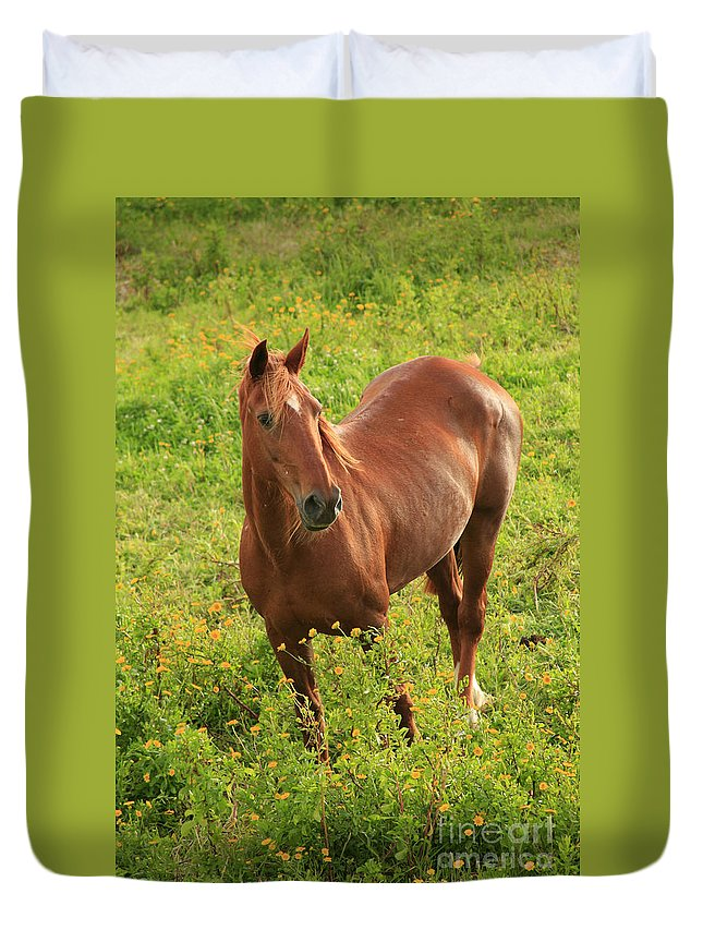 Animals Duvet Cover featuring the photograph Horse In A Field With Flowers by Gaspar Avila