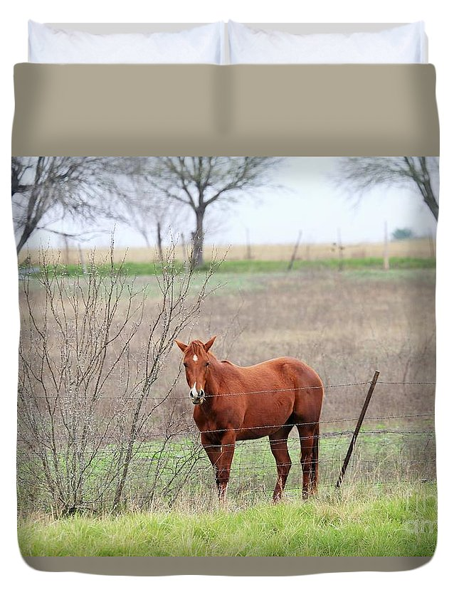 Landscape Duvet Cover featuring the photograph Horse by Jeff Downs