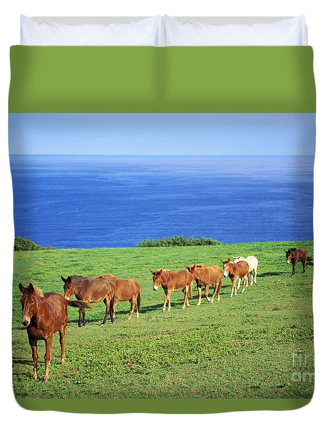 Afternoon Duvet Cover featuring the photograph Horses by Bob Abraham - Printscapes