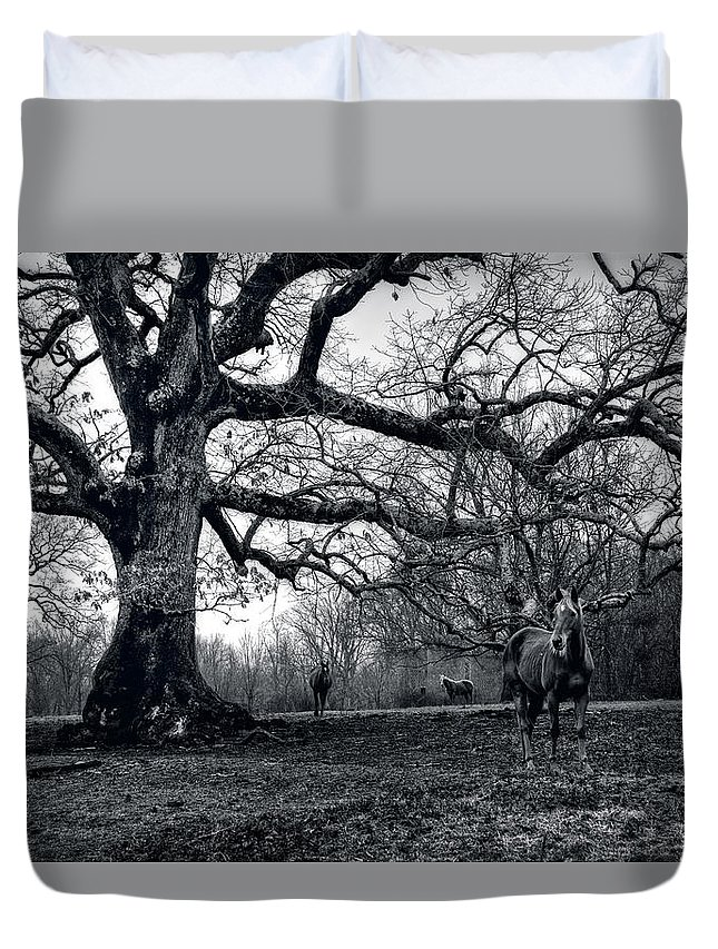 Horses Duvet Cover featuring the photograph Horses On A Foggy Morning In Black And White by Greg and Chrystal Mimbs