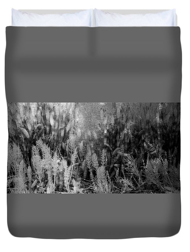 Abstract Duvet Cover featuring the photograph Horsetail Plant Panorama Two by Lyle Crump