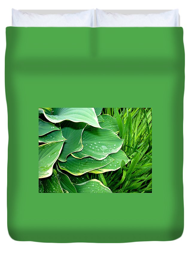 Hostas Duvet Cover featuring the photograph Hosta Leaves And Waterdrops by Nancy Mueller