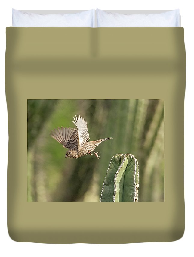 House Duvet Cover featuring the photograph House Finch 0573 by Tam Ryan