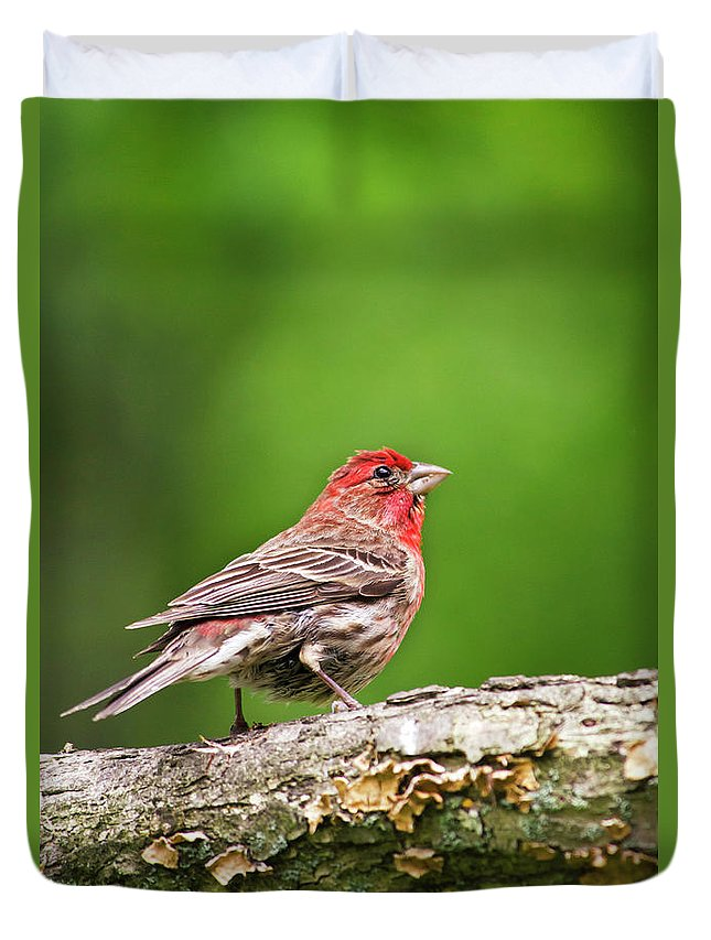 Bird Duvet Cover featuring the photograph House Finch Perched by Christina Rollo