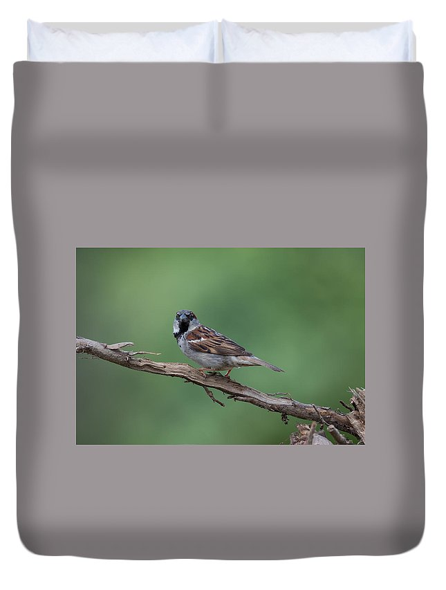 House Sparrow Duvet Cover featuring the photograph House Sparrow by Jan M Holden