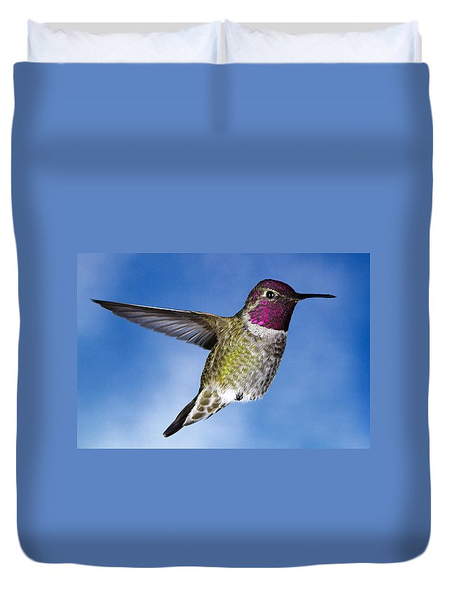 Hummingbird Duvet Cover featuring the photograph Hovering In Sky by William Freebillyphotography