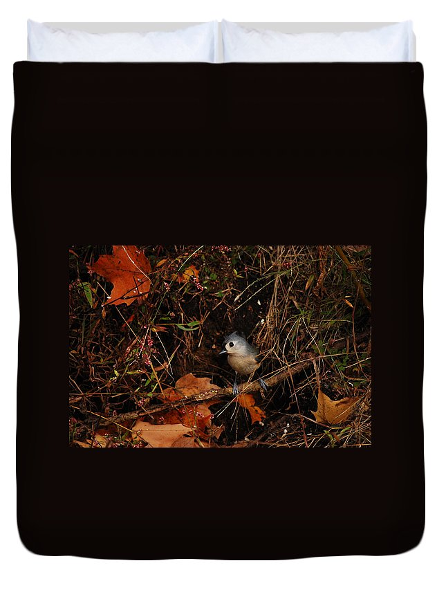 Titmouse Duvet Cover featuring the photograph How Did You Find Me by Lori Tambakis