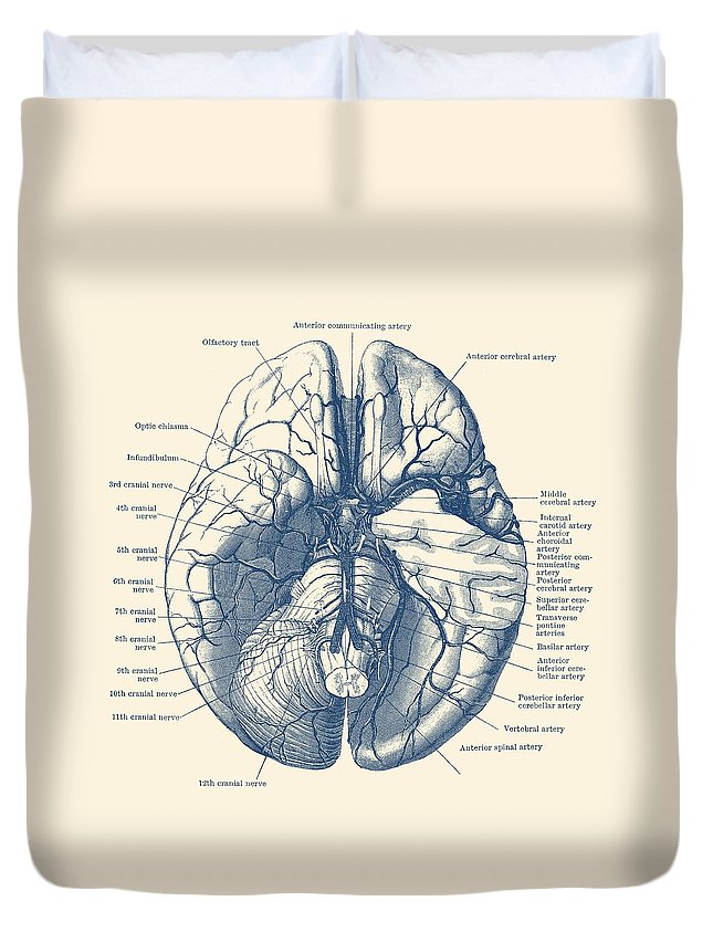 Human Brain Diagram - Anatomy Poster Duvet Cover for Sale by Vintage ...