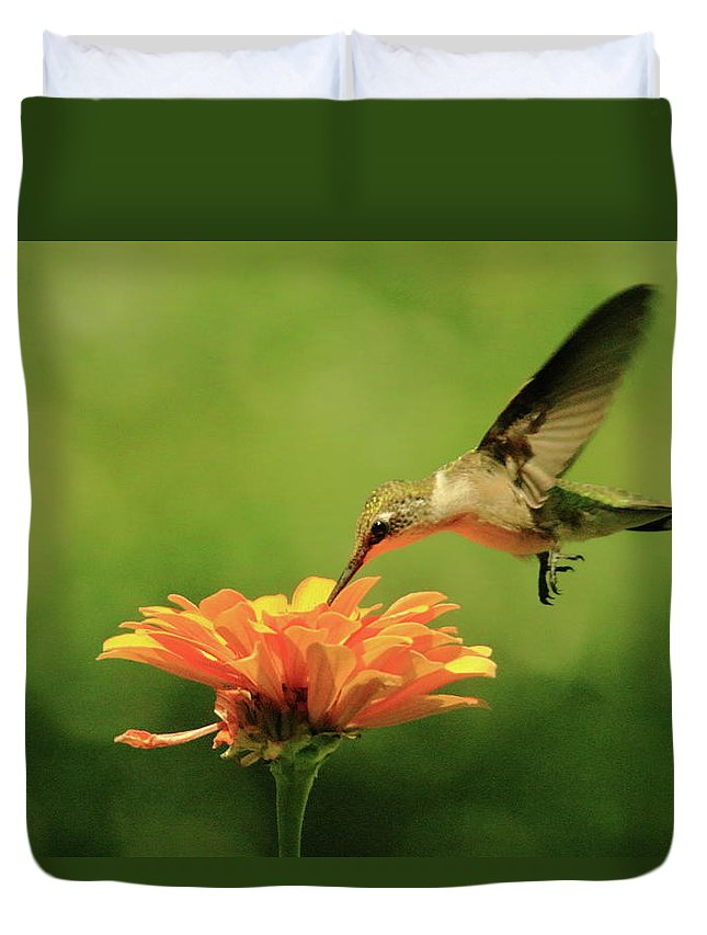Recent Duvet Cover featuring the photograph Hummer And Zinnia by Geraldine Scull