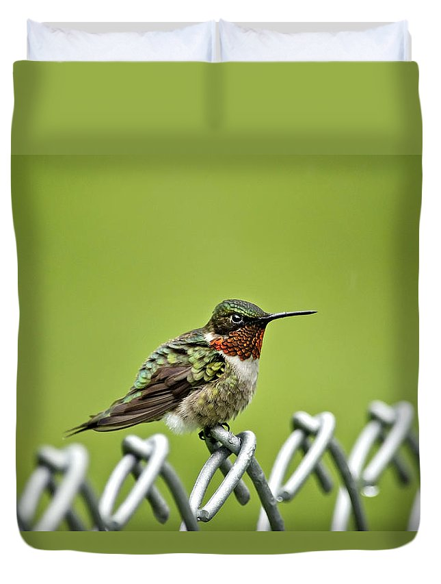 Bird Duvet Cover featuring the photograph Hummingbird On A Fence by Christina Rollo