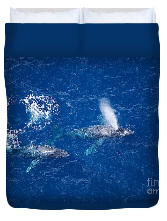 Above Duvet Cover featuring the photograph Humpback Whales by Ron Dahlquist - Printscapes