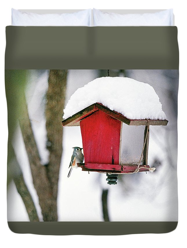 Small Duvet Cover featuring the photograph A Hungry Chickadee by Buddy Mays