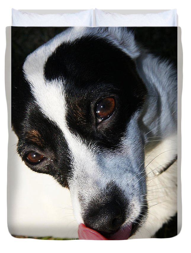 Pet Duvet Cover featuring the photograph Hungry Dog by Jorgo Photography - Wall Art Gallery