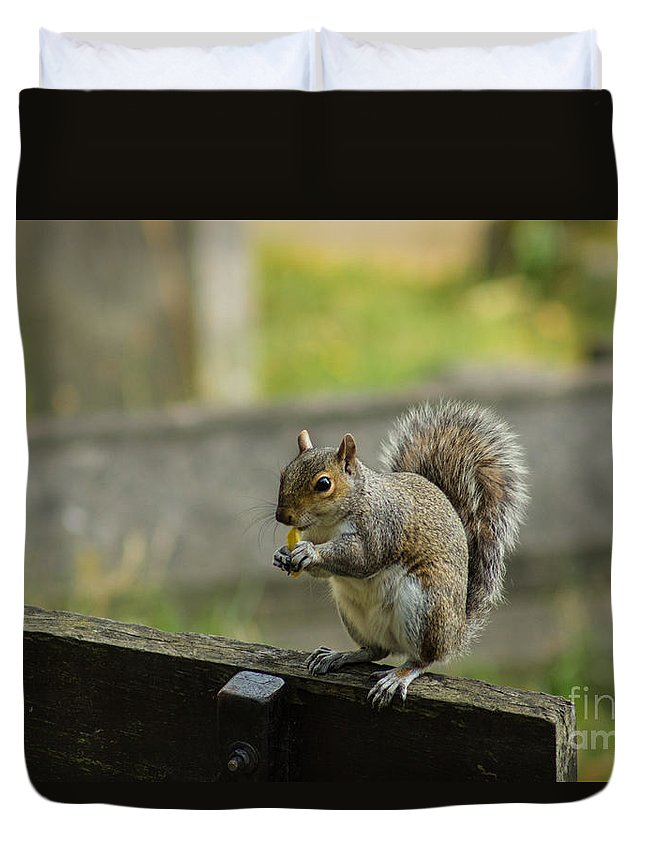 Squirrel Duvet Cover featuring the photograph Hungry Squirrel by Fabrizio Malisan