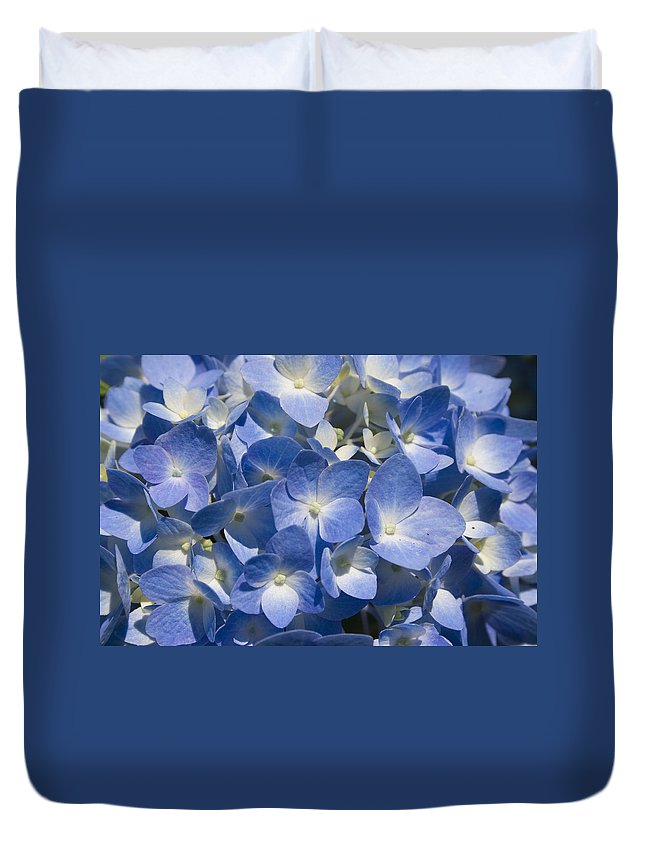 Flower Bloom Blue White Close Nature Sunny Summer Hydrangea Duvet Cover featuring the photograph Hydrangea by Andrei Shliakhau