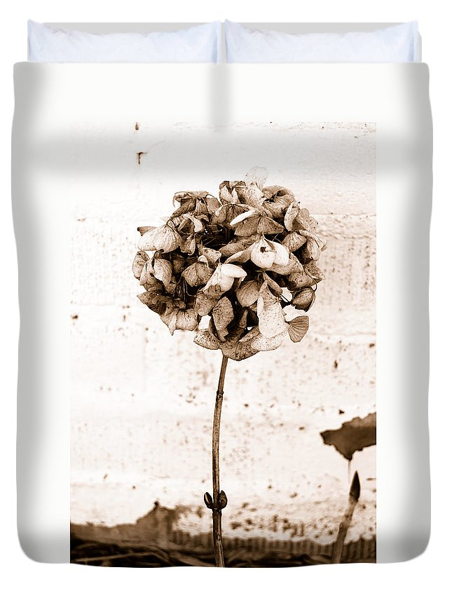 Sepia Duvet Cover featuring the photograph Hydrangea Interest by Trish Hale