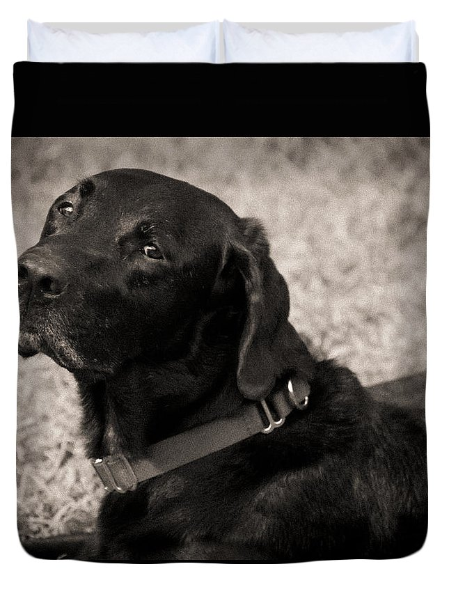 Black Lab Duvet Cover featuring the painting I Am Being Good by Roger Wedegis