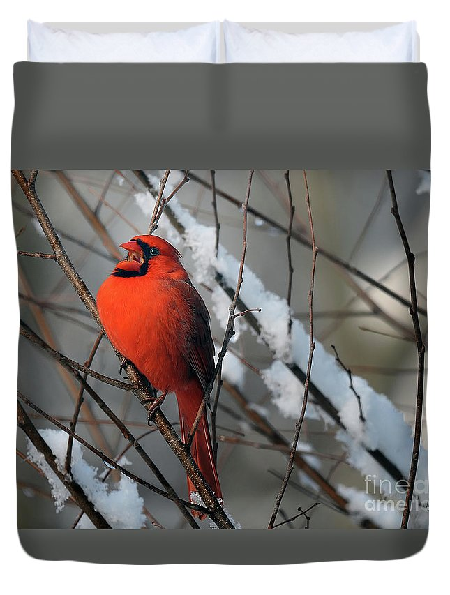 Bird Duvet Cover featuring the photograph A Song Of Joy by Lois Bryan
