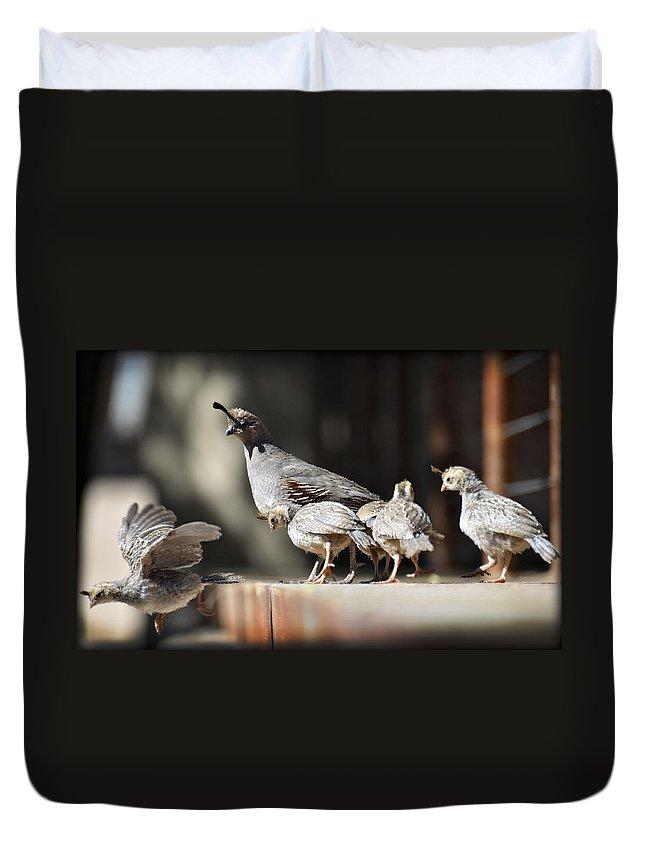 Gambel's Quail Duvet Cover featuring the photograph I Can Fly by Saija Lehtonen