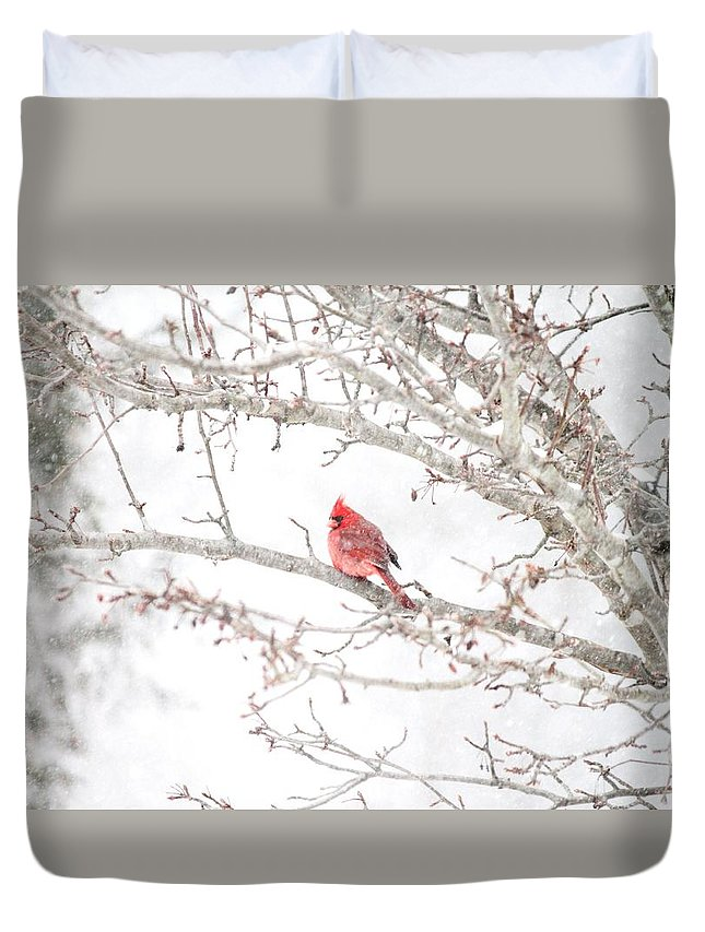 Snow Duvet Cover featuring the photograph I Tend To Attract Attention by Sandra Bennett