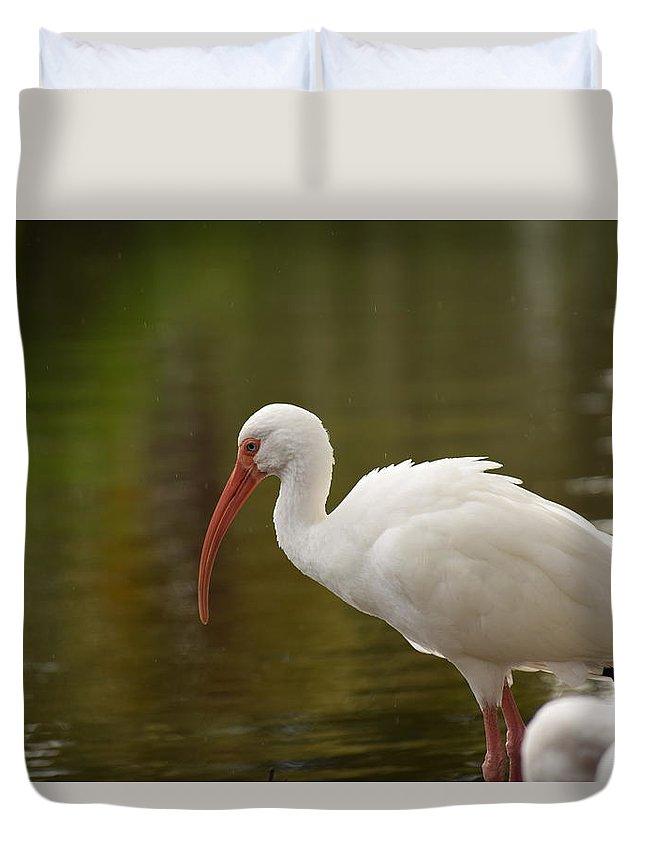 Ibis Duvet Cover featuring the photograph White Ibis Portrait by Tarun Jain
