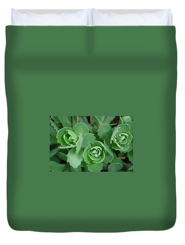 Green Duvet Cover featuring the photograph Ice Plant by Susan Baker