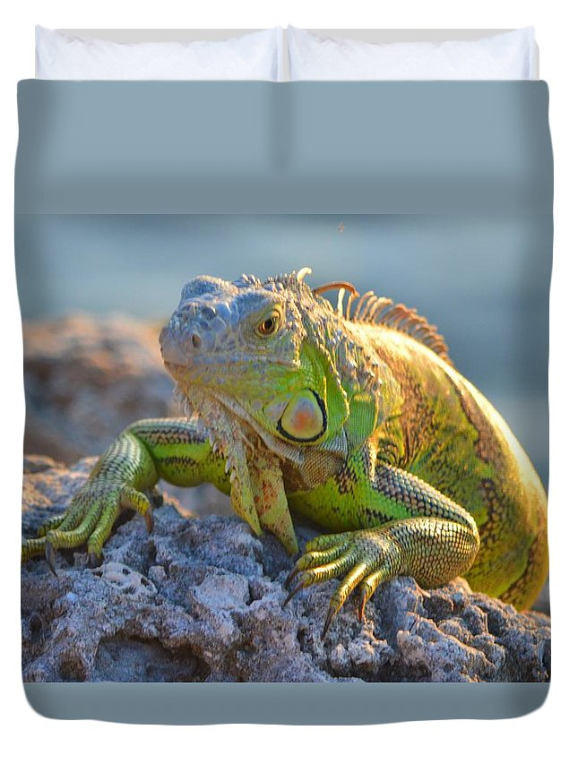 Iguana Duvet Cover featuring the photograph Iguana 2 by Dave Masters