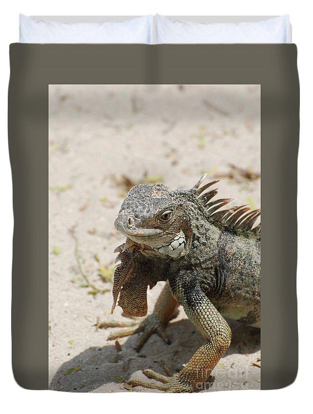 Iguana Duvet Cover featuring the photograph Iguana Sitting On A Sandy Beach In Aruba by DejaVu Designs