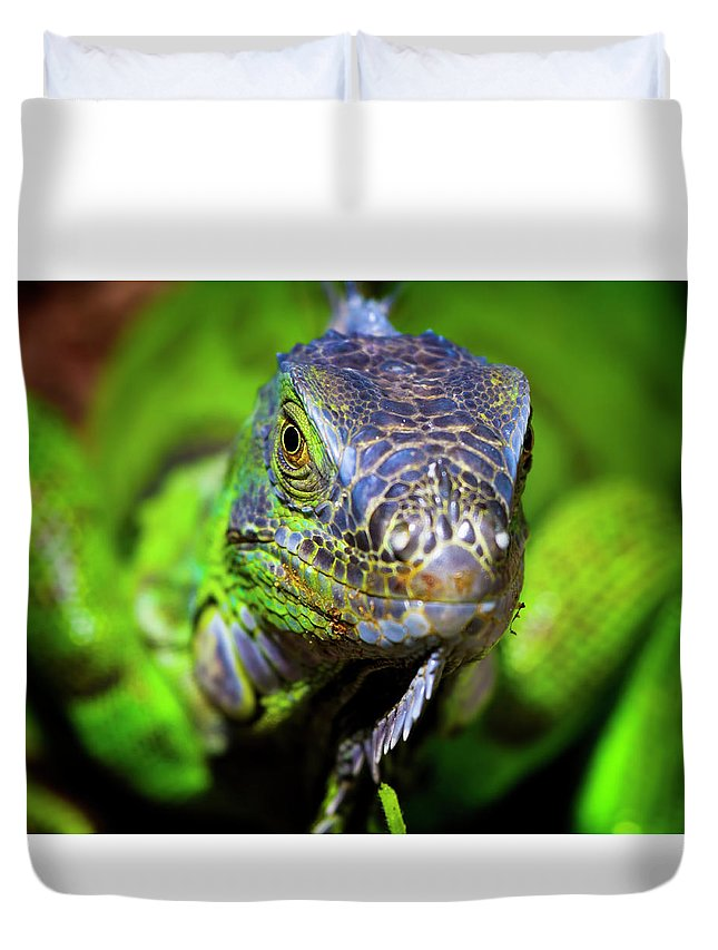 Iguana Duvet Cover featuring the photograph Iguana Stare by Mark Andrew Thomas