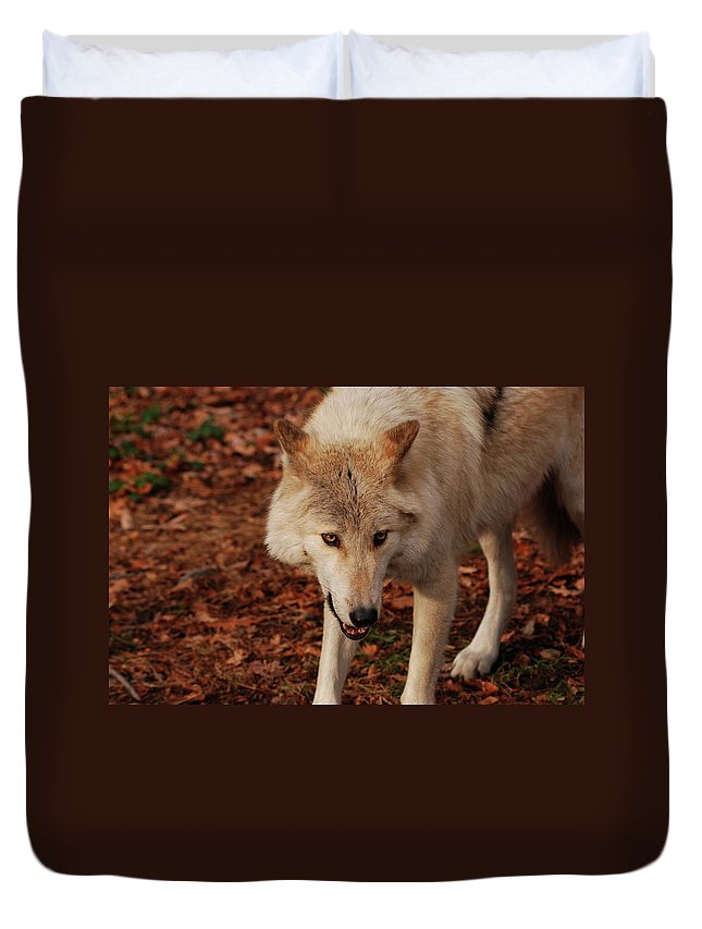 Wolf Duvet Cover featuring the photograph I'm Coming For You by Lori Tambakis
