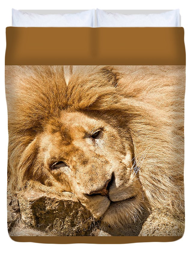 Lion Duvet Cover featuring the photograph Im Sleeping by Scott Carruthers