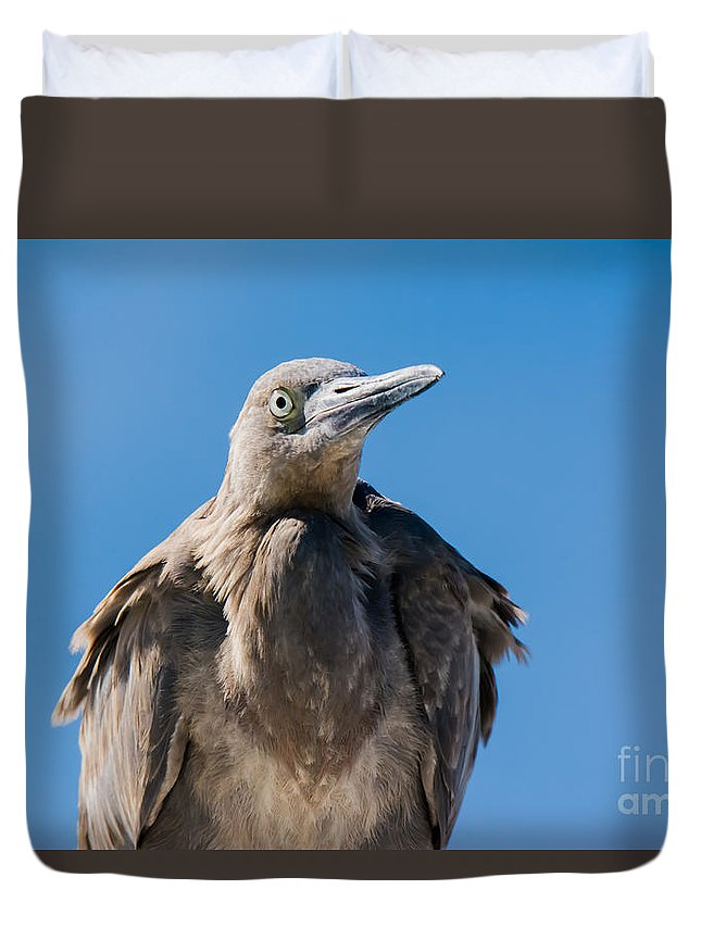 Egret Duvet Cover featuring the photograph Immature Reddish Egret by John Greco